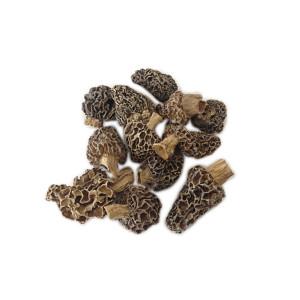 Colmenilla-silvestre-2-3-cm